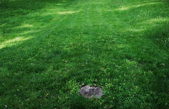 Swath (of mowed grass) and Stump