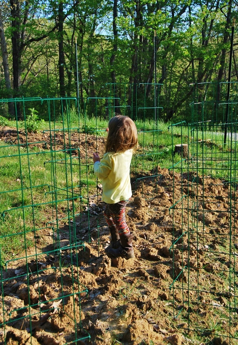 Baby checking the placement of the tomato cages. Planting this weekend!