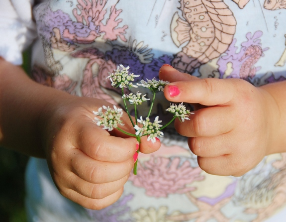 Cilantro Blossoms