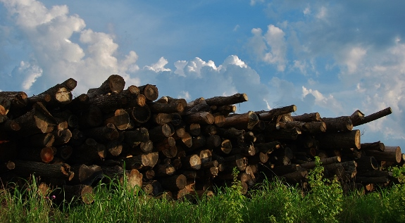 A big pile of logs at Fick's (seen while walking toward the levy).