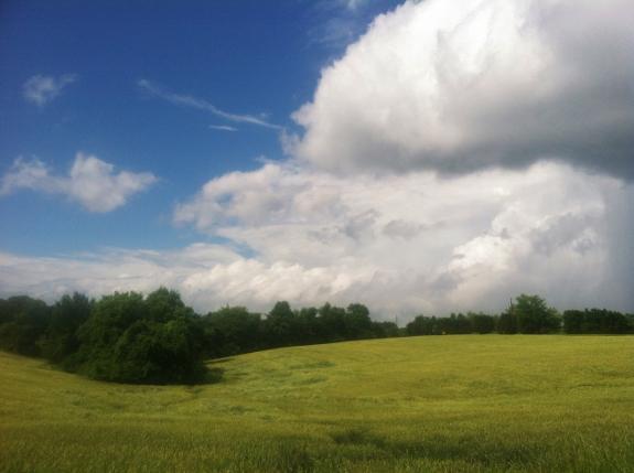 Pretty Summer Landscape (near Spy Garden)