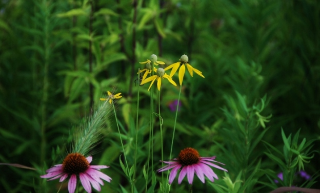 Tons of variations of black-eyed-Susan-type flowers...