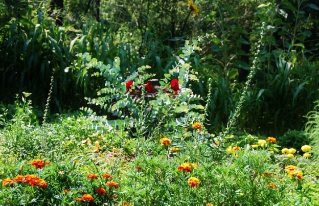 Marigolds, eucalyptus, hibiscus