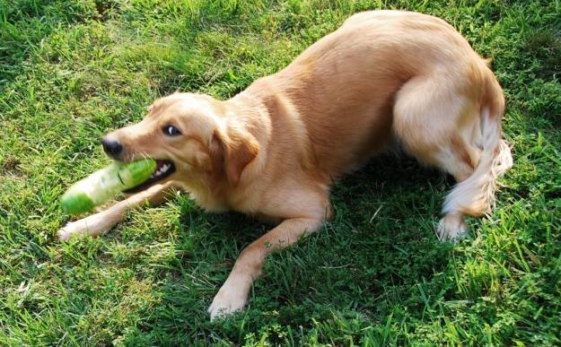Delikatesse Dog Toy