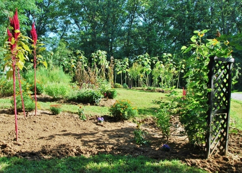 This area in the foreground is where the melons were and winter greens have been planted.