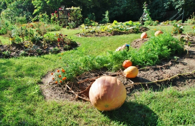 Can you spy a pumpkin with a blue bow?