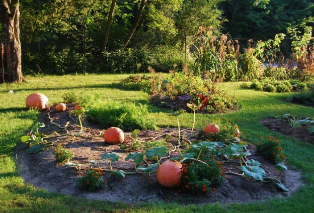 Atlantic Giant Pumpkin Patch