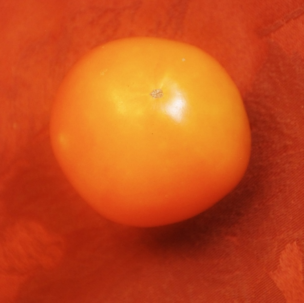 Tomato that wants to be a pumpkin.