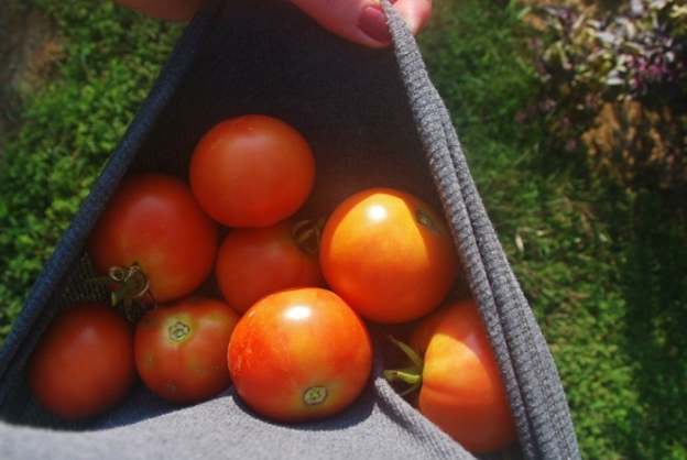 Sioux Tomatoes