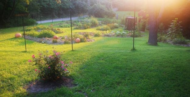 Late September Garden
