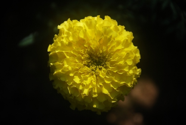 I love yellow marigolds. Will be sure to save lots of these seeds (the flowers themselves are big clusters of seeds)