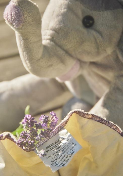 Lavender Elephant!