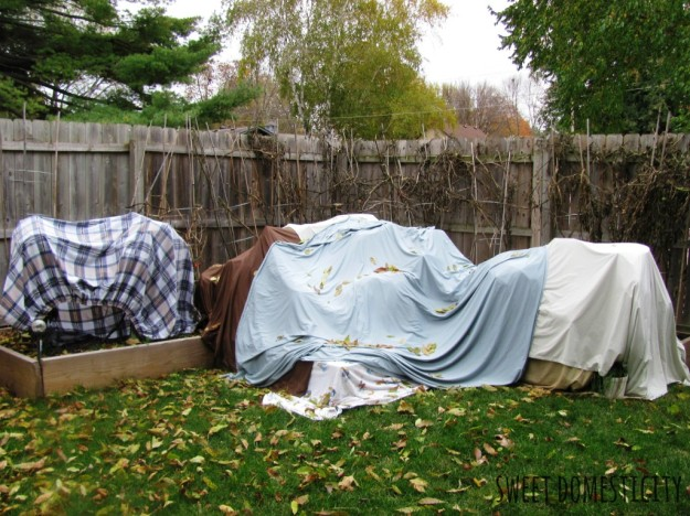 Sweet Domesticity's Garden