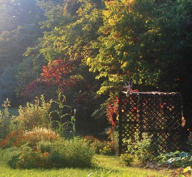 Beautiful Fall in the Garden