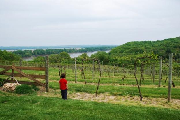 A little Spy visiting Oak Glen winery in Hermann