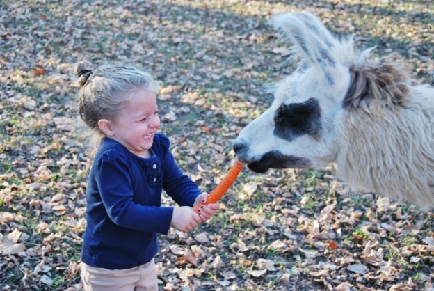 Baby had SO MUCH fun feeding them carrots!