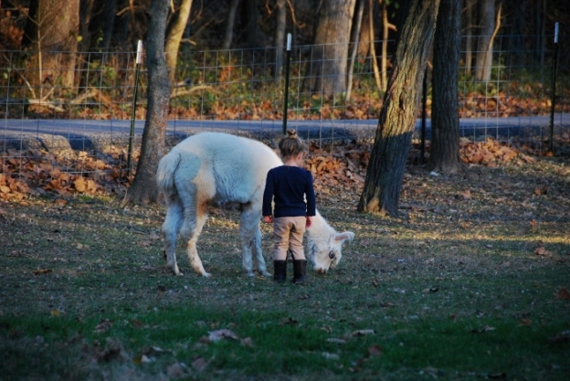 Baby with grazing alpaca