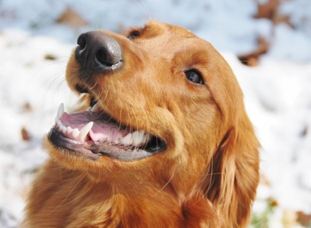 Maggie (Aunt Spy's dog)