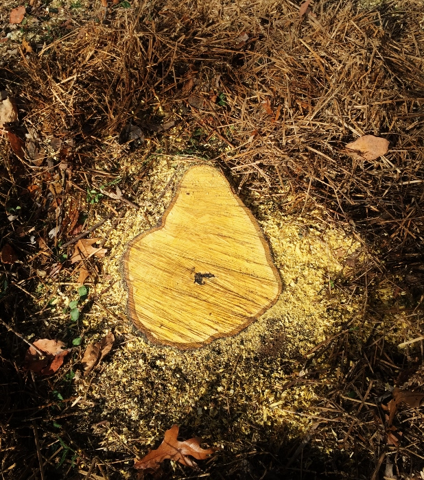 Yellow Tree Stump