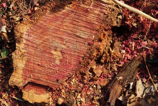 Pink Stump