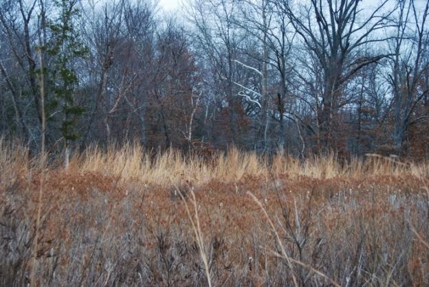 Prairie/Tree Line