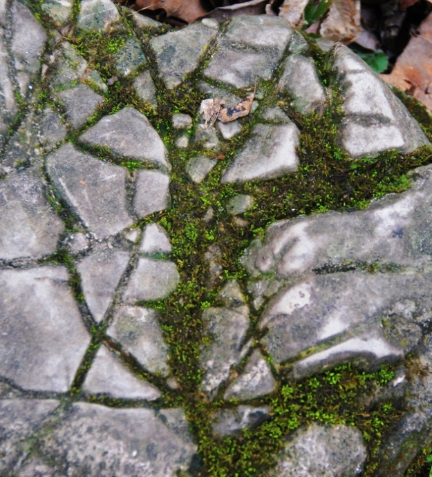 Rock/Moss
