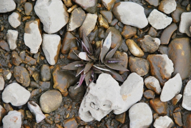 A purple plant (covered in silt)