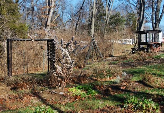 Spy Garden 12.26.14