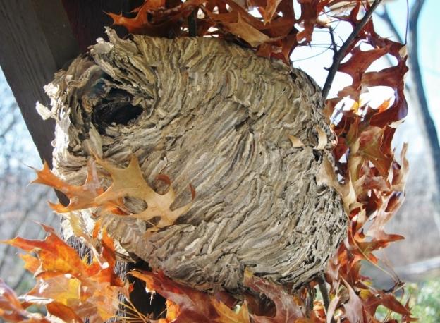(Abandoned) Hornet's Nest