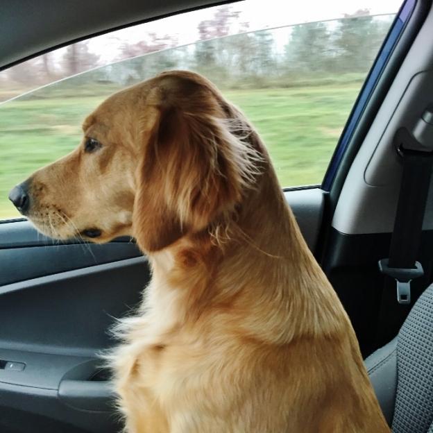 Dexie; cruising