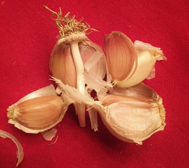 Garlic, still not in the ground (maybe tomorrow?!)