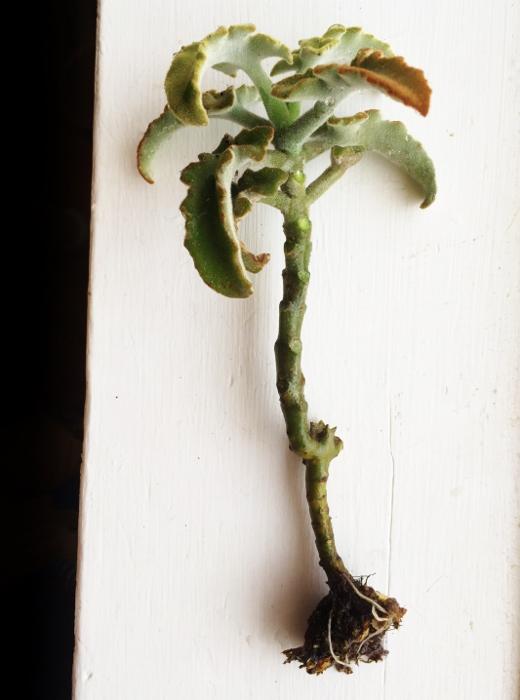 Succulent...like a bonsai palm tree!