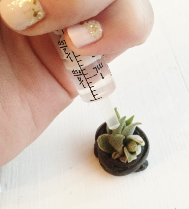 Just watering the plants (hahahha tiny bonsai succulents)