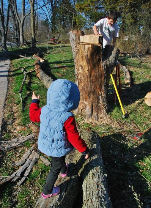 Fun with a fallen tree