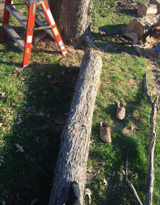 Log Balance Beam