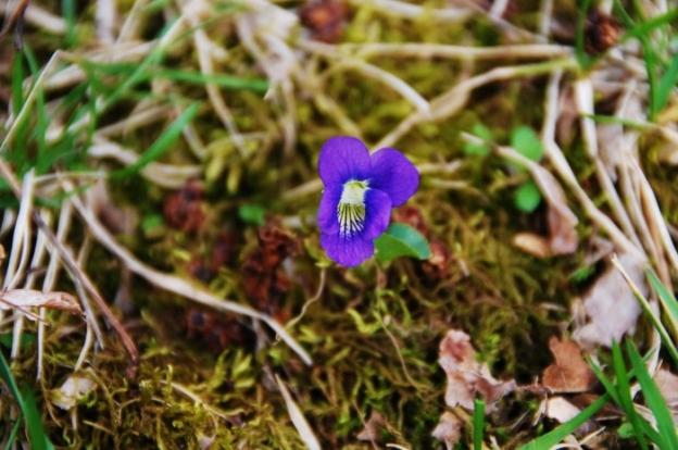 A little violet