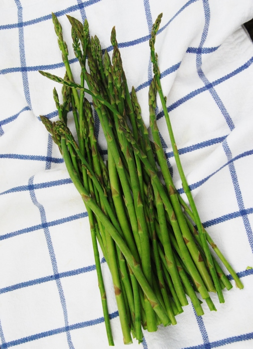 Asparagus (we've harvested several bundles from our patch over the past few weeks)