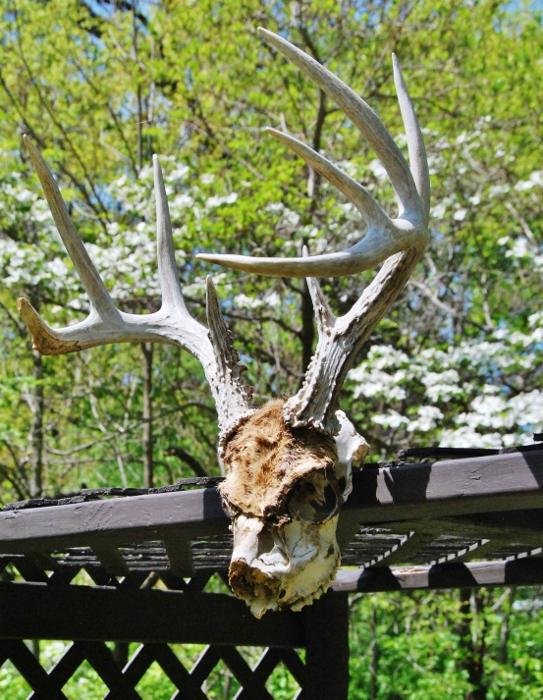 Spring Skull haha