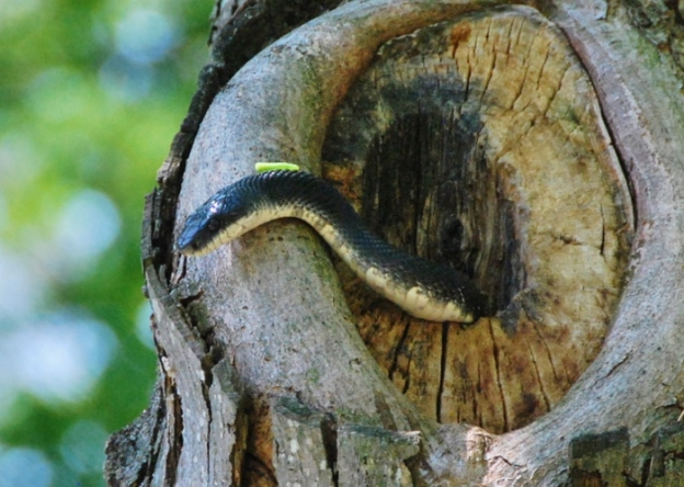 See the tiny caterpillar??