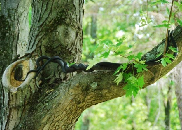 Scandelous snakes!