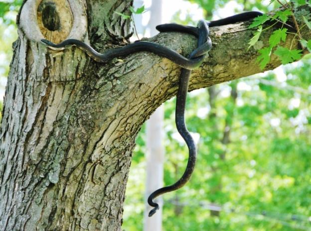 Snake acrobats