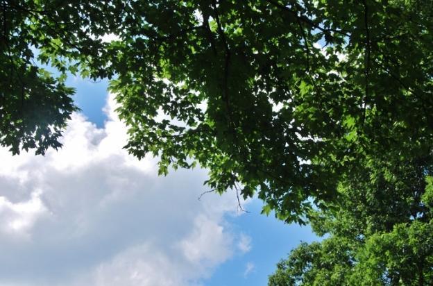 Spy Garden Sky