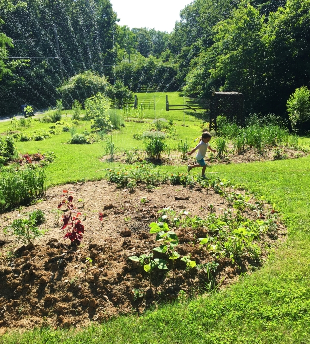 This was the ONLY time we have watered the garden this year (taken 3 weeks ago). It has rained sooo much which is unusual for summer here in St. Louis.