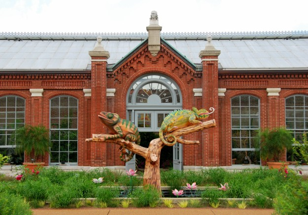 These lizard lanterns fit perfectly in front of the Linnean house (the oldest operating greenhouse west of the Mississippi)