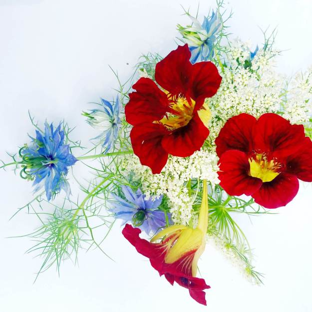 Red, white & blue!(nasturtiums, carrot blossoms & nigella)