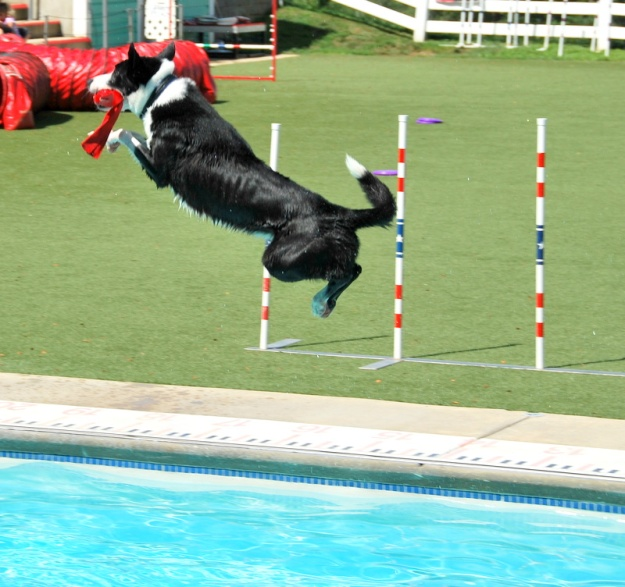 Nice catch! Purina farms is a fun (and free!) spot for an outing near St. Louis