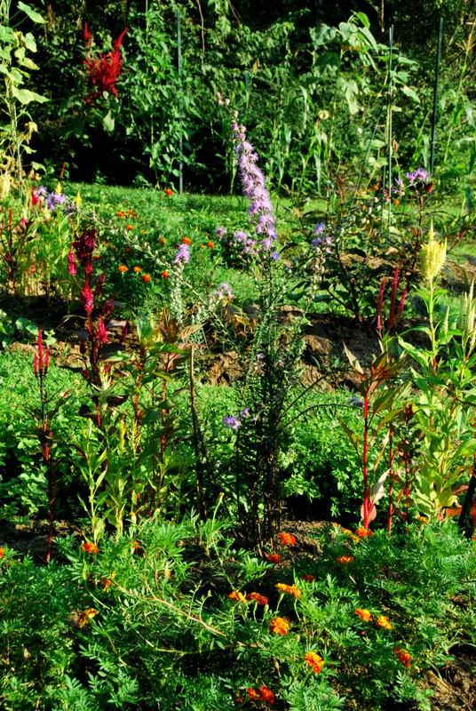 Festive Garden