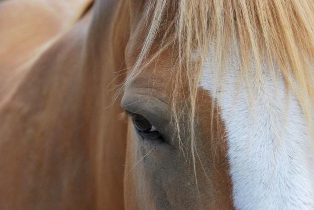 Horsey Close-up