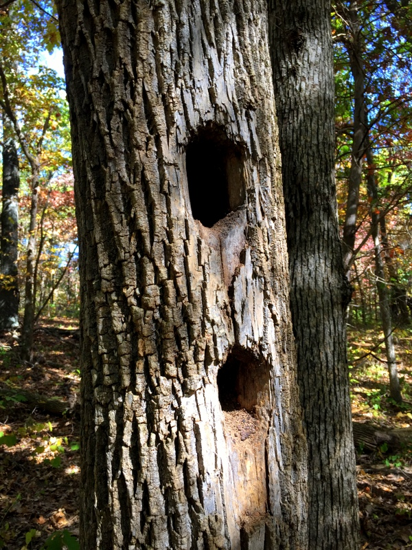 Homes (for Woodpeckers?)