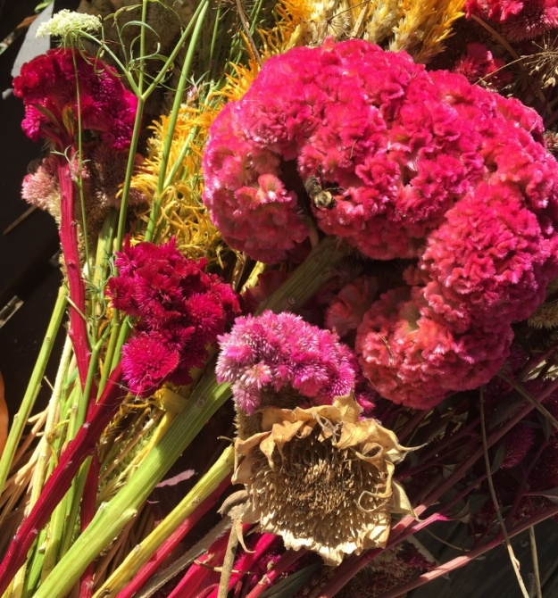 Different types of celosia